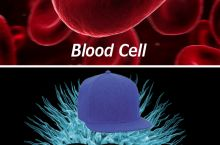 Rival Cells...