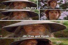 Ofc i bring it frodo