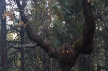 Whoever put those eyes in the tree: Fuck you!