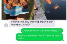 Tortoisles.