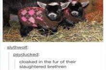 You don't kill sheep to make wool