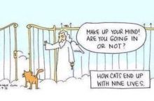 How Cats End Up With Nine Lives