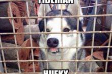 Fiberian Hufky