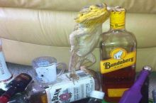 Apologies if you've already seen a lizard on liquor bottles today.