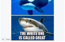 The killer whale dindu nuffin