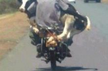 Mootorcycle