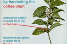 How decaf coffee is made