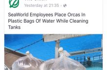 This is why SeaWorld needs to go!