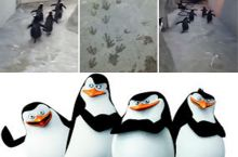 Smile and wave boys, smile and wave