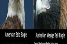 Our eagle > Your eagle