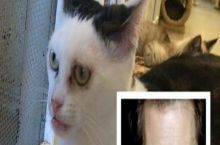 This cat looks like Steve Buscemi.